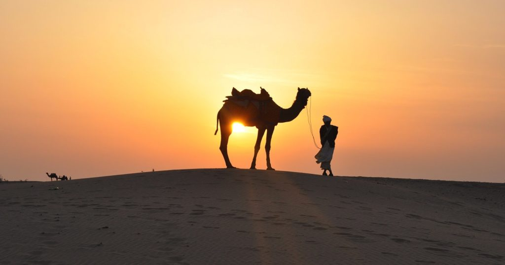 Where to Enjoy Desert and Camel